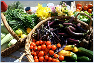 The Healthy Eating Hub at North Ainslie